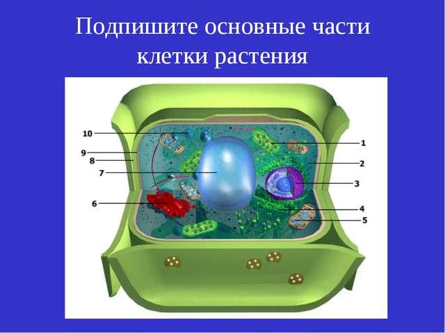 Подпишите основные части клетки растения