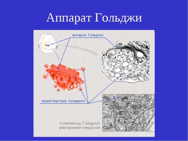 Аппарат Гольджи