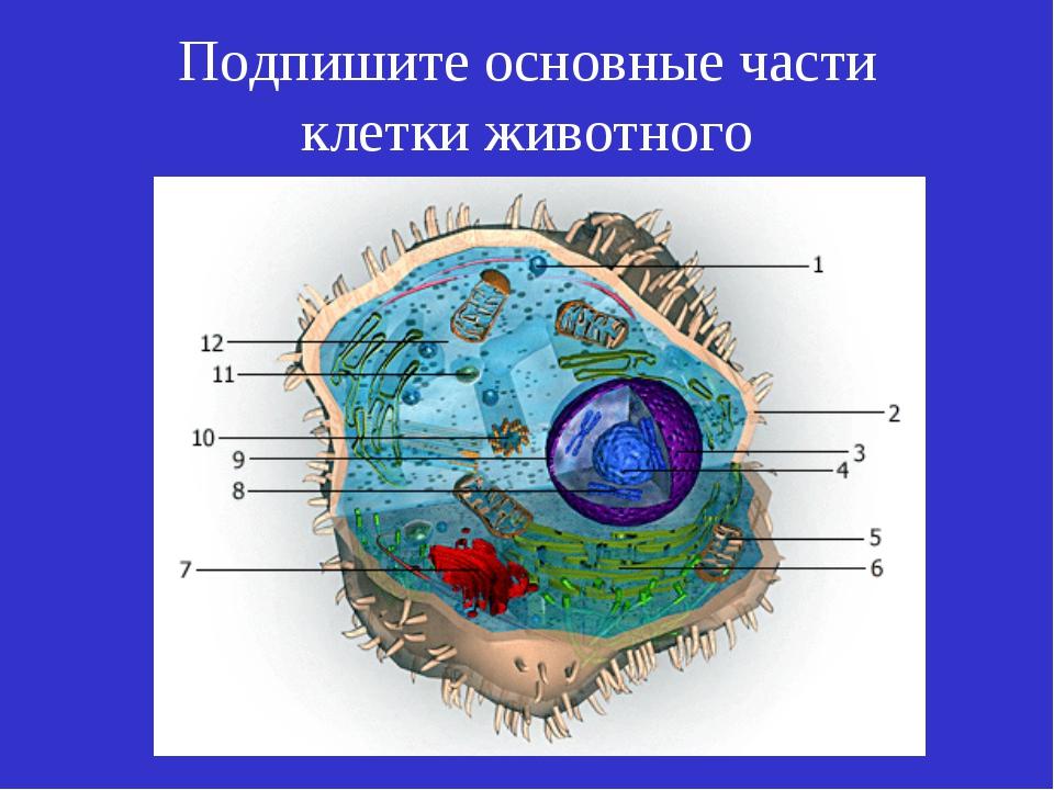 Подпишите основные части клетки животного