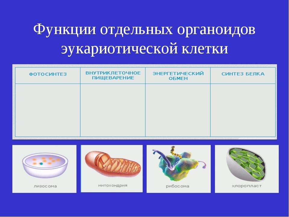 Функции отдельных органоидов эукариотической клетки