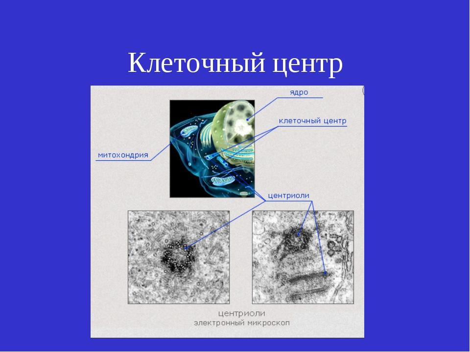 Клеточный центр