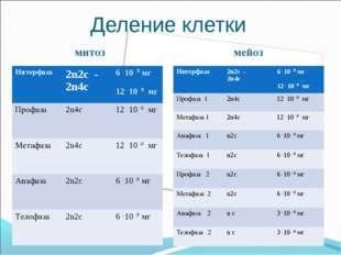 Деление клетки митоз мейоз Интерфаза 2n2c - 2n4c6 . 10 -9 мг 12 . 10 -9 мг