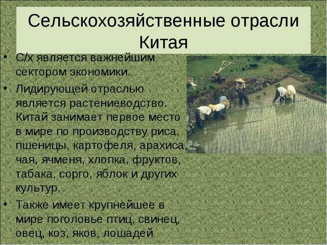 Сельскохозяйственные отрасли Китая С/х является важнейшим сектором экономики....