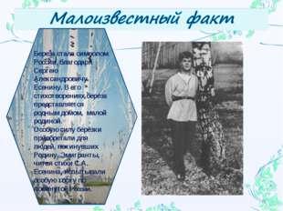 * Береза стала символом России, благодаря Сергею Александровичу Есенину. В ег