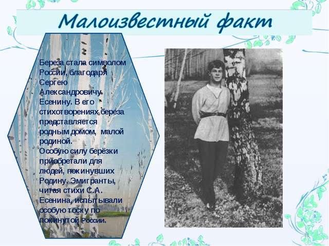 * Береза стала символом России, благодаря Сергею Александровичу Есенину. В ег...