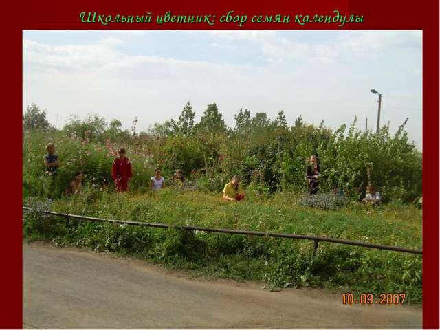 Школьный цветник: сбор семян календулы