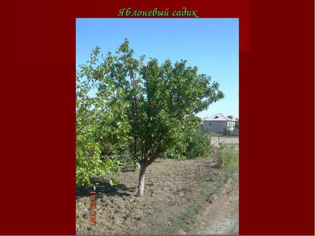 Яблоневый садик