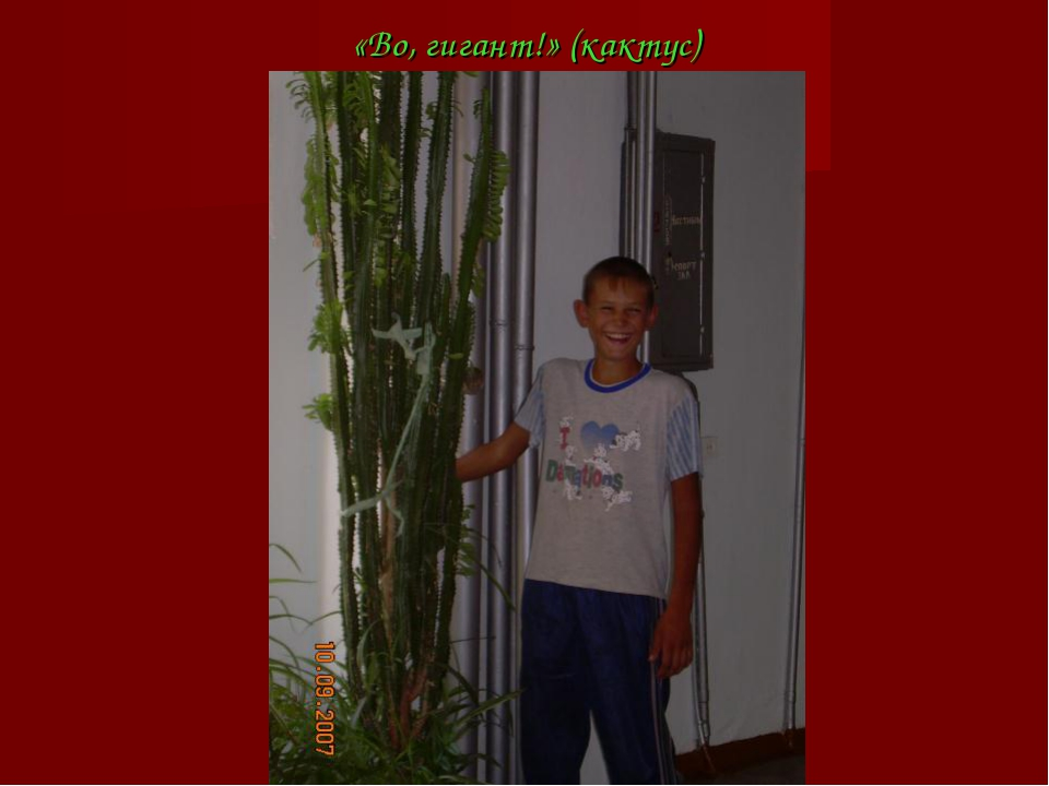 «Во, гигант!» (кактус)