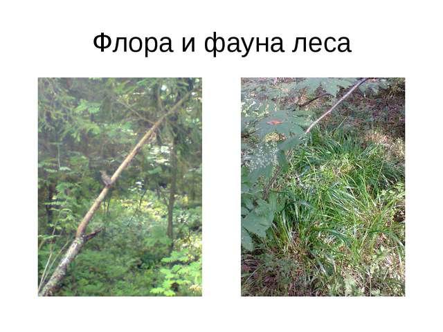 Флора и фауна леса