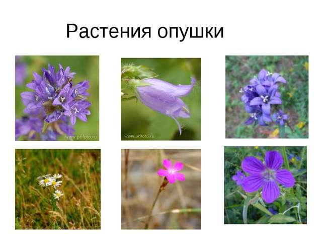Растения опушки