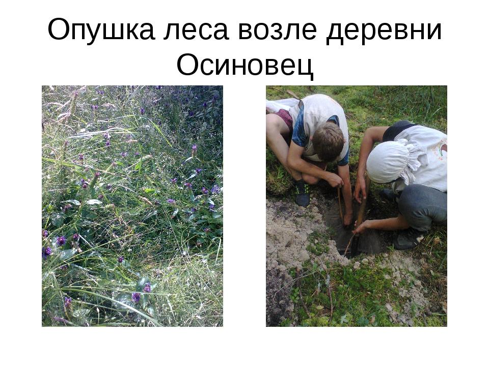 Опушка леса возле деревни Осиновец