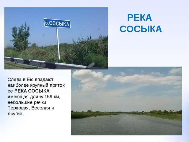 Слева в Ею впадают: наиболее крупный приток ее РЕКА СОСЫКА, имеющая длину 159...