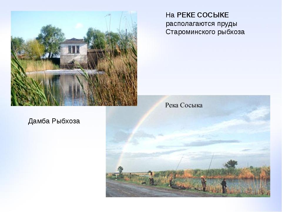 На РЕКЕ СОСЫКЕ располагаются пруды Староминского рыбхоза Дамба Рыбхоза
