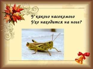 У какого насекомого Ухо находится на ноге?