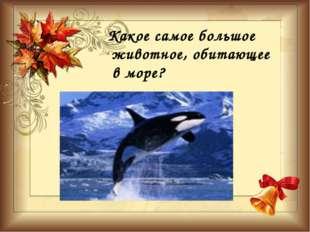 Какое самое большое животное, обитающее в море?