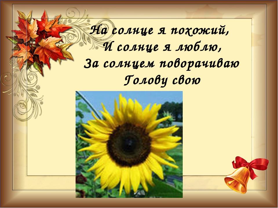 На солнце я похожий, И солнце я люблю, За солнцем поворачиваю Голову свою