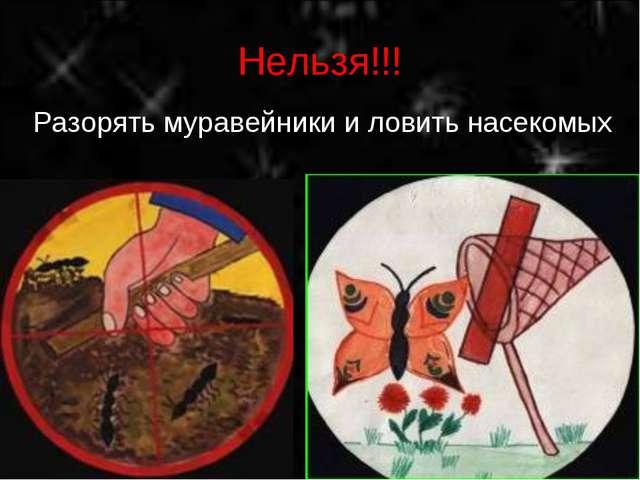 Нельзя!!! Разорять муравейники и ловить насекомых