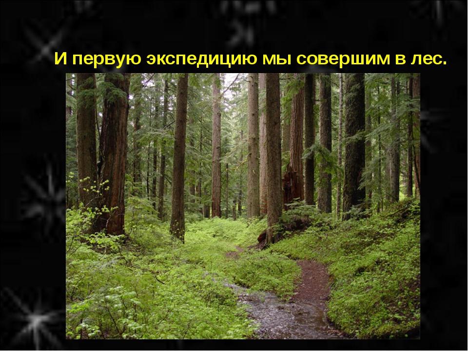 И первую экспедицию мы совершим в лес.