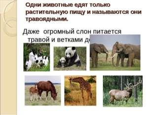 Одни животные едят только растительную пищу и называются они травоядными. Даж