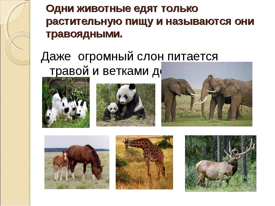 Одни животные едят только растительную пищу и называются они травоядными. Даж...