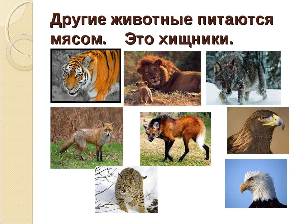 Другие животные питаются мясом. Это хищники.