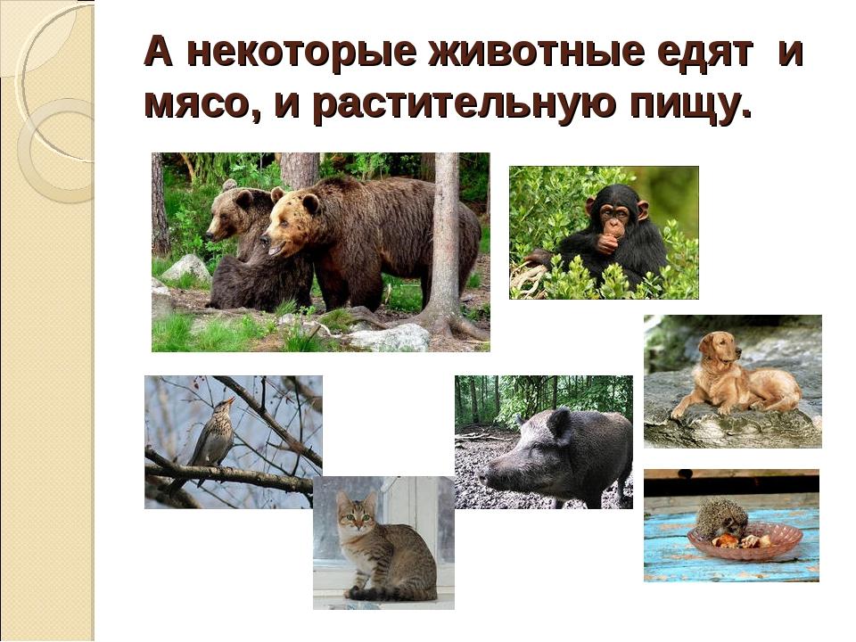 А некоторые животные едят и мясо, и растительную пищу.