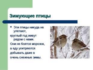 Зимующие птицы Эти птицы никуда не улетают, круглый год живут рядом с нами. О