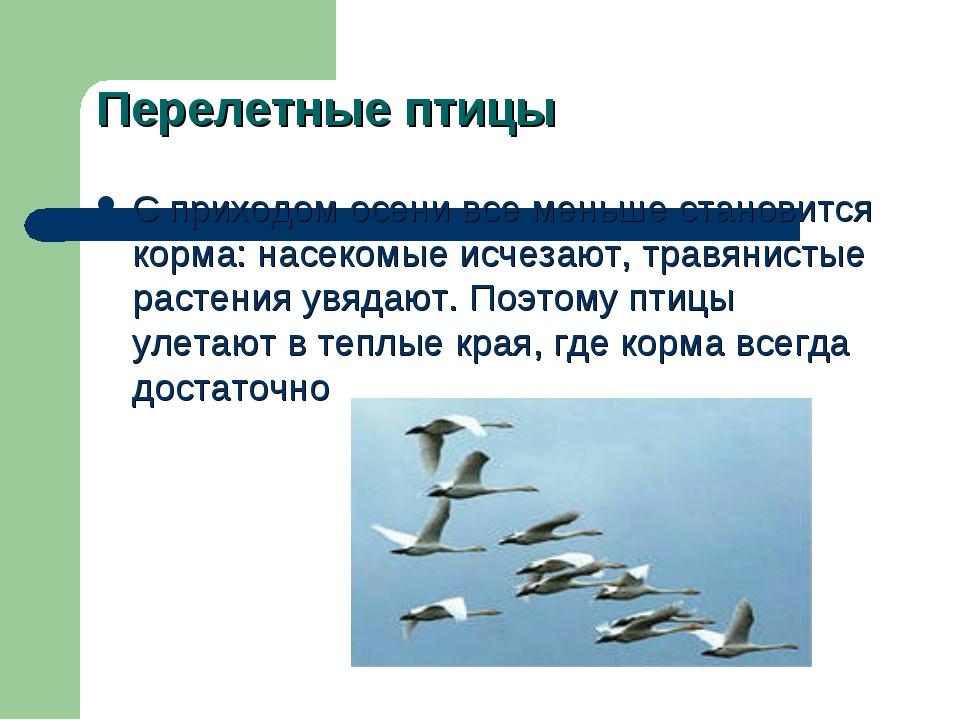 Перелетные птицы С приходом осени все меньше становится корма: насекомые исче...