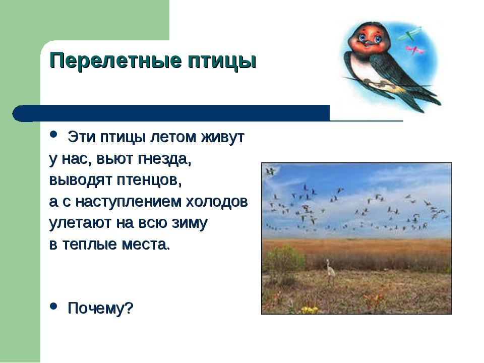 Перелетные птицы Эти птицы летом живут у нас, вьют гнезда, выводят птенцов, а...
