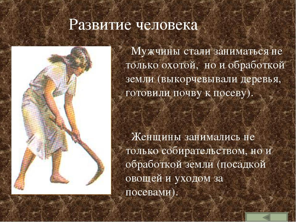 Развитие человека Мужчины стали заниматься не только охотой, но и обработкой...