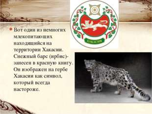Вот один из немногих млекопитающих находящийся на территории Хакасии. Снежный