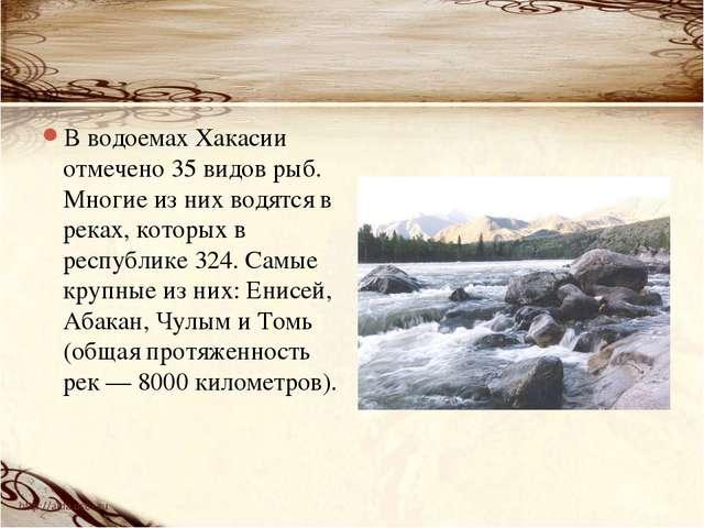 В водоемах Хакасии отмечено 35 видов рыб. Многие из них водятся в реках, кото...