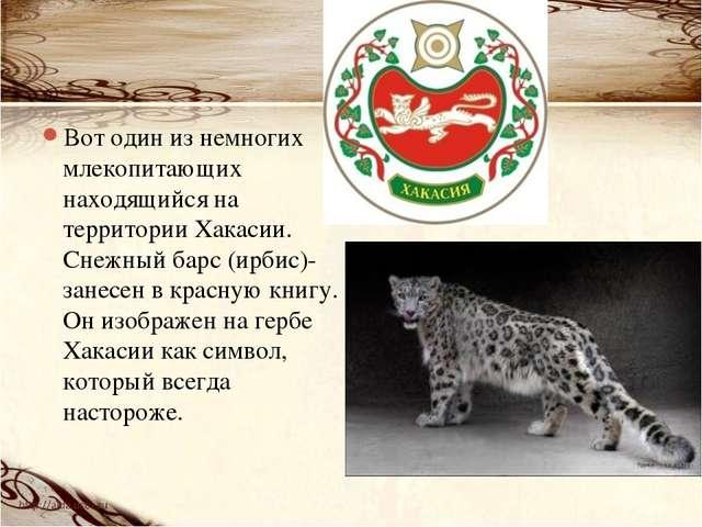 Вот один из немногих млекопитающих находящийся на территории Хакасии. Снежный...