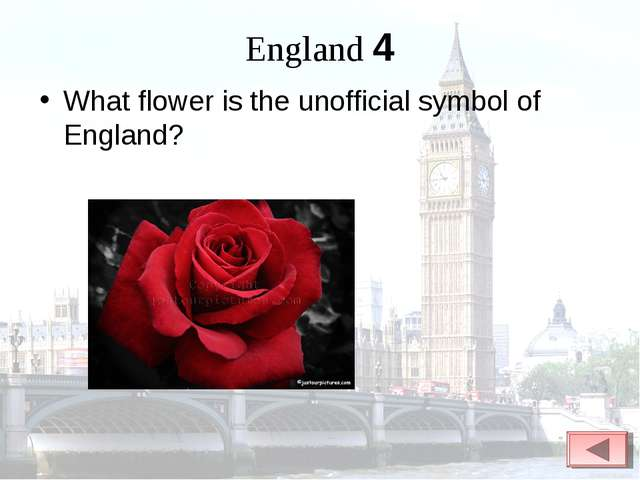 England 4 What flower is the unofficial symbol of England?