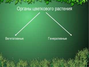 Органы цветкового растения Вегетативные Генеративные