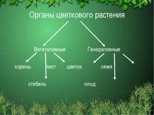 Органы цветкового растения Вегетативные Генеративные корень лист цветок семя