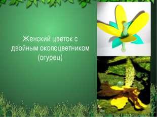 Женский цветок с двойным околоцветником (огурец)