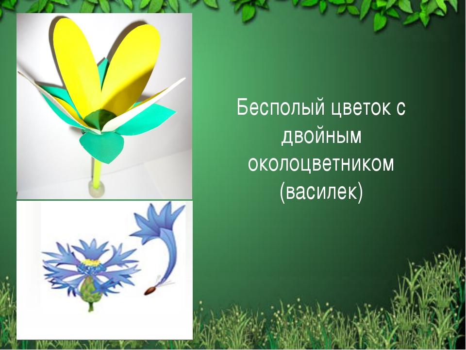 Бесполый цветок с двойным околоцветником (василек)