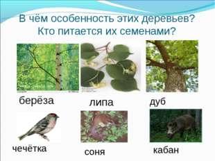 В чём особенность этих деревьев? Кто питается их семенами? берёза липа дуб че