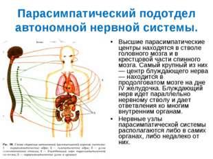 Парасимпатический подотдел автономной нервной системы. Высшие парасимпатическ