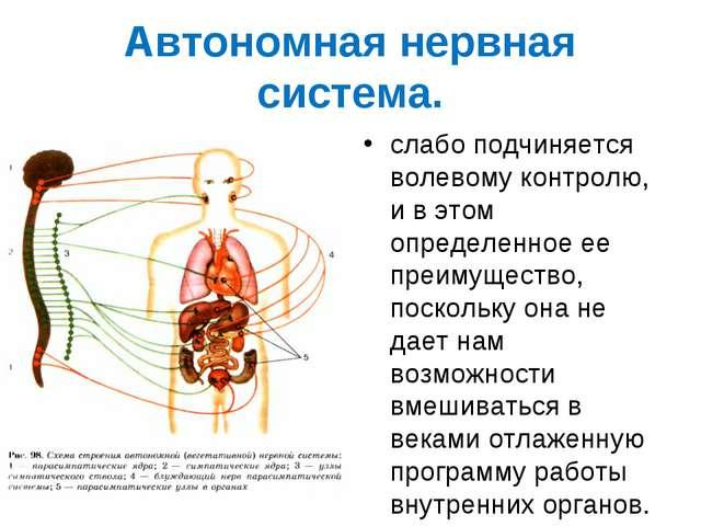 Автономная нервная система. слабо подчиняется волевому контролю, и в этом опр...