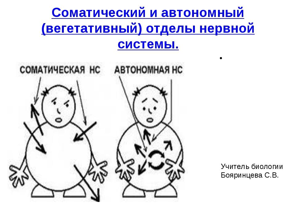Соматический и автономный (вегетативный) отделы нервной системы. Учитель биол...