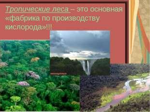 Тропические леса – это основная «фабрика по производству кислорода»!!!