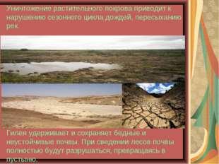 Уничтожение растительного покрова приводит к нарушению сезонного цикла дожде