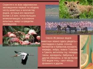 Серенгети из всех африканских заповедников первый по общему числу животных и