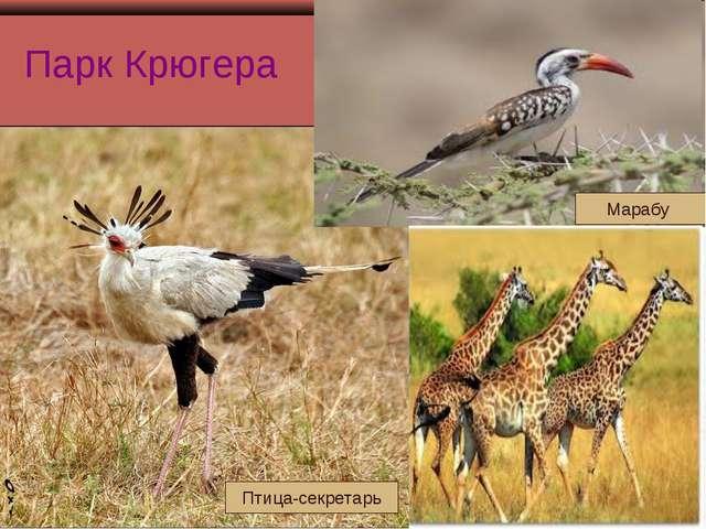 Парк Крюгера Птица-секретарь Марабу