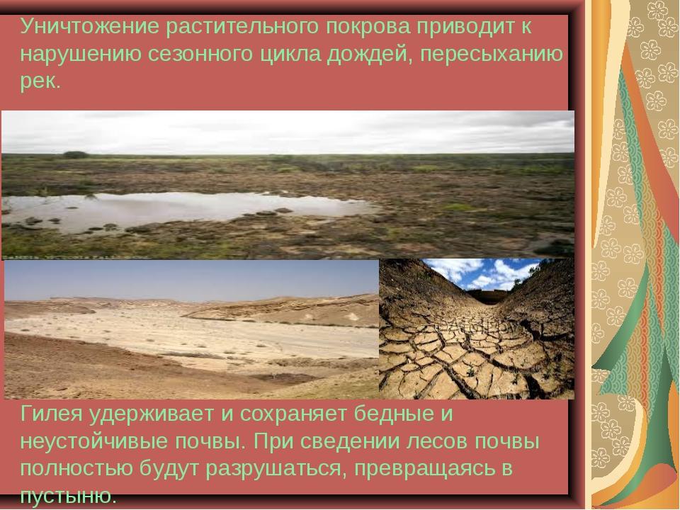 Уничтожение растительного покрова приводит к нарушению сезонного цикла дожде...