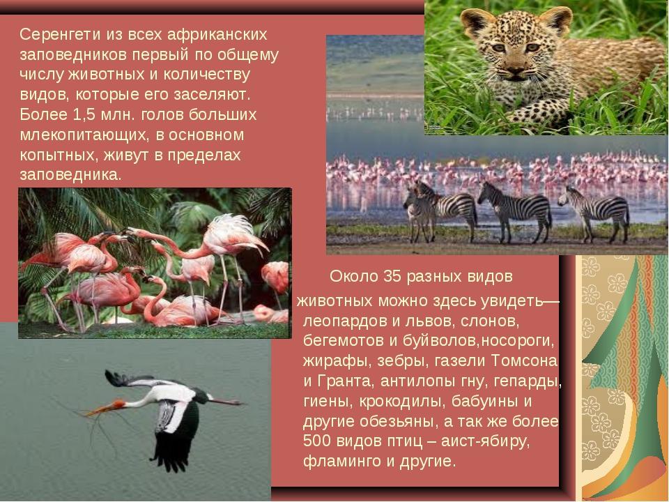 Серенгети из всех африканских заповедников первый по общему числу животных и...