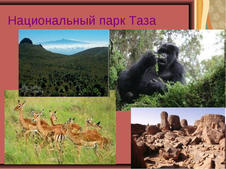 Национальный парк Таза