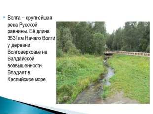 Волга – крупнейшая река Русской равнины. Её длина 3531км Начало Волги у дерев